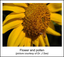 Flower and pollen  (picture courtesy of Dr. J See)